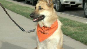 Pups On Patrol @ Planned Pethood